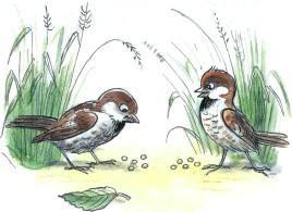 воробьи зерна птицы