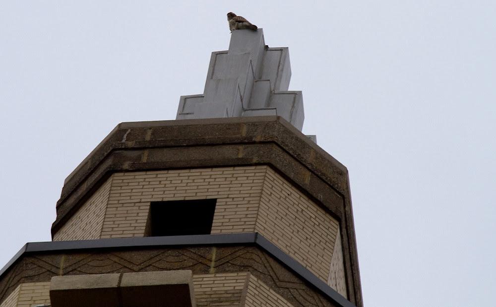 El Dorado Hawk