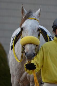 競馬今現役で一番かわいい馬は 神競馬2nd 2ch競馬まとめ
