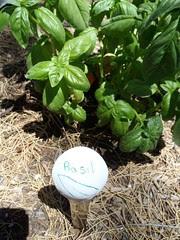 Basil Spoon Garden Marker