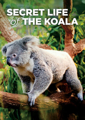 Secret Life of the Koala - Season 1