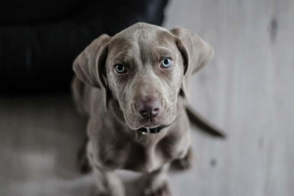 Img - Cães evitam pessoas negativas