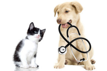 5 reasons to get pet insurance - Everything Geraldton