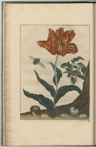 Naauwkeurige waarneemingen, 1740 d