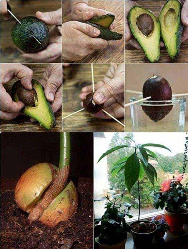 AD-Gardening-Tips-24