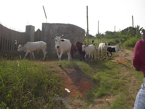 tending their flock