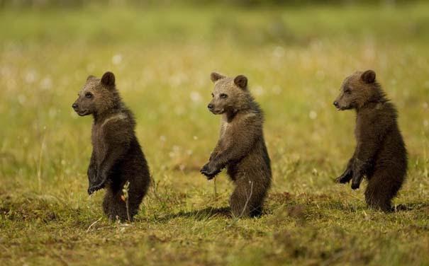 Οι 50 καλύτερες φωτογραφίες ζώων του 2012 (34)