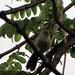 Bird in a Tree