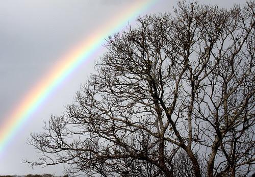 IMG 0715.1 Giant Rainbow