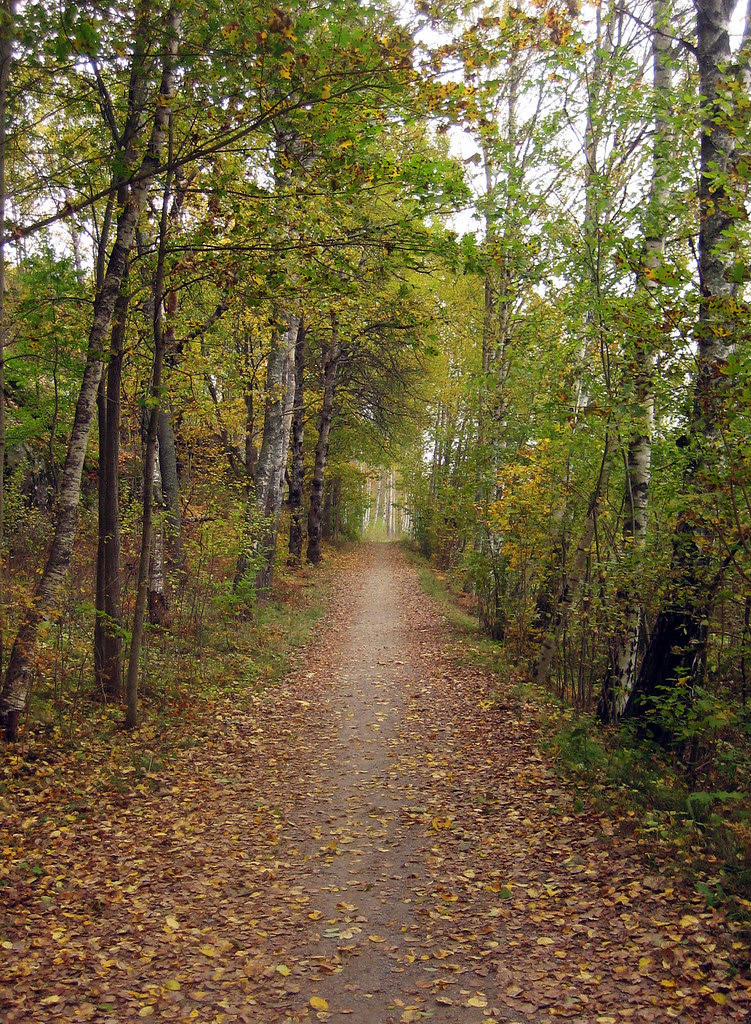 The Path (October 14th)