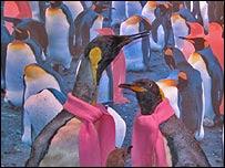 parada de pinguins gay em Oslo