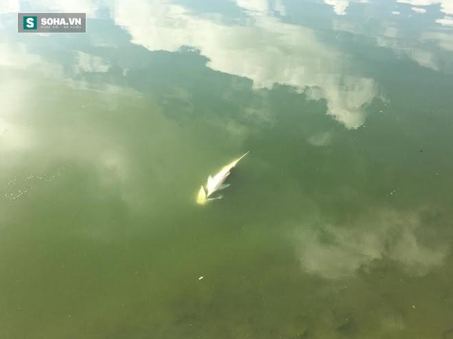 Hà Nội: Cá chết nhiều bất thường ở hồ Linh Đàm - Ảnh 3.