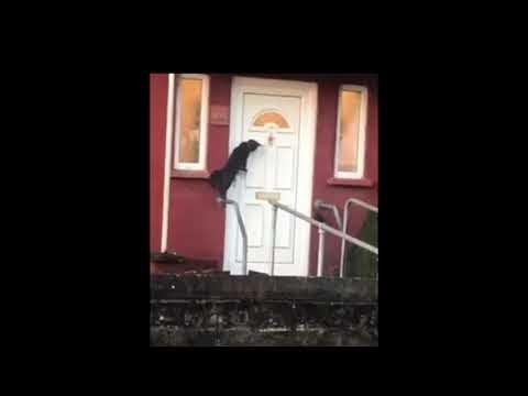 (Video) Raih Hampir 2 Juta Tontonan, Adegan Kucing 'Ketuk Pintu' Rumah Cuit Hati Netizen