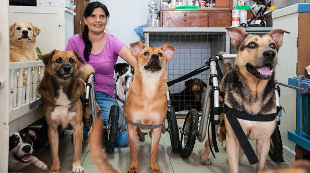 Un oasis para perros desvalidos