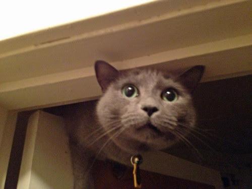 Morty atop door frame.jpg
