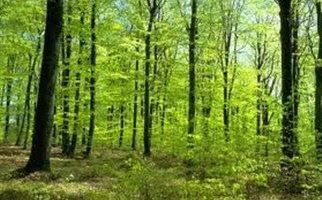Perierga.gr - Ζούσε στο δάσος τα 5 τελευταία χρόνια…