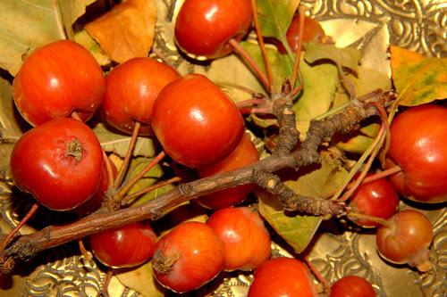 frutos en otoño