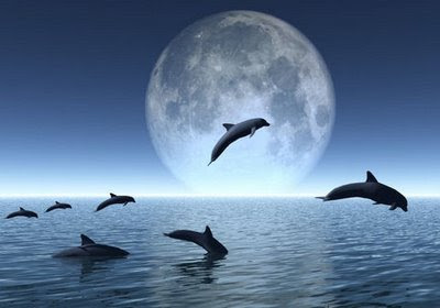Δελφίνια θεραπευτές παιδιών