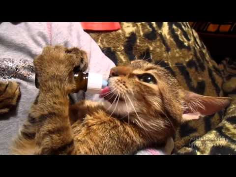 More Catnip!!1! - Video
