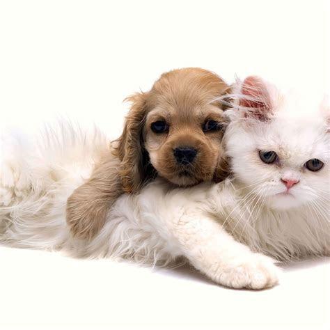 wallpaper chien chat droidsoft