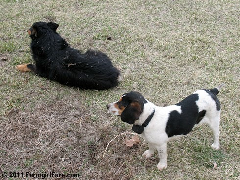 Best Buds Bert and Bear 7 - Farmgirl Fare