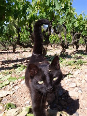 Wine cat - already drunk?