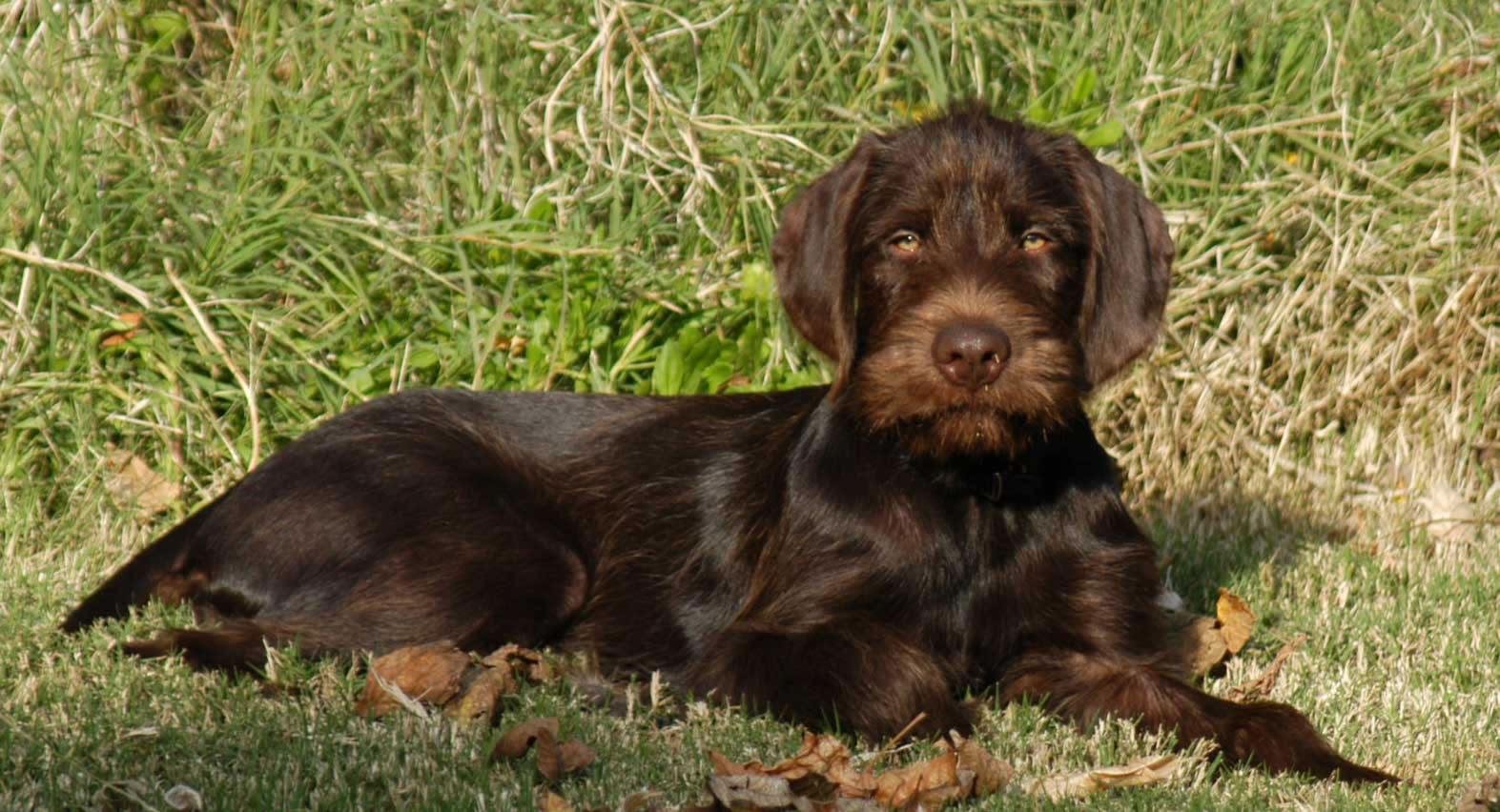... dog photo and wa
