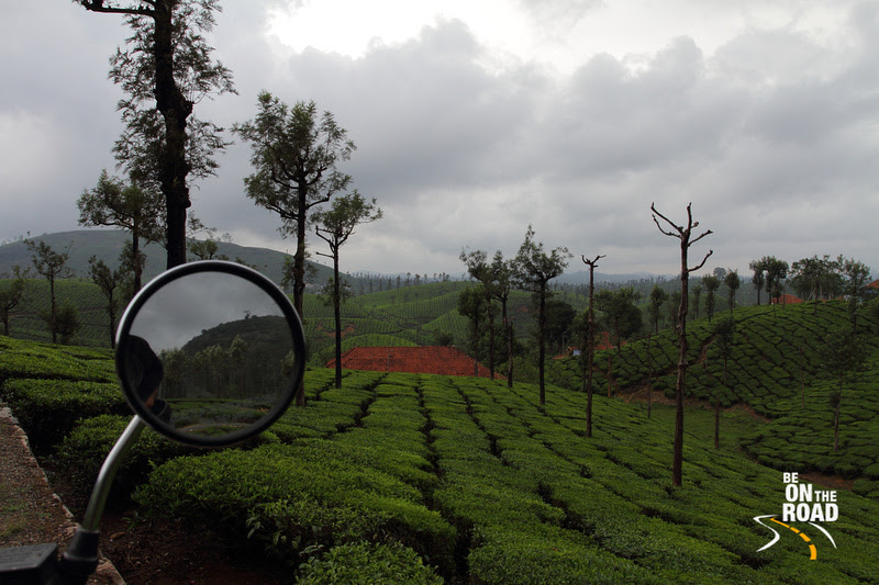 Shooting the pristine tea estates of Valparai