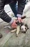 De transeúnte a héroe: Salva la vida de un perrito callejero tras darle respiración boca a boca