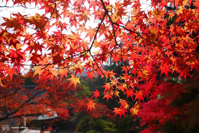 Panasonic_GX7_Kyoto_12