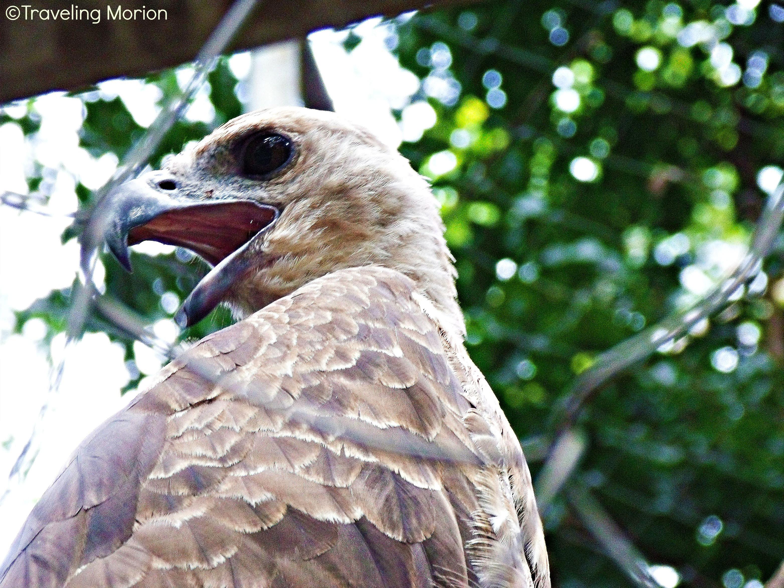 Lantawan Eco Park Kitcharao, Agusan del Norte