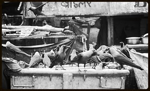 The Crows Of Bandra Bazar Road by firoze shakir photographerno1