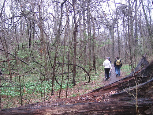 Old Forest Nature Hike