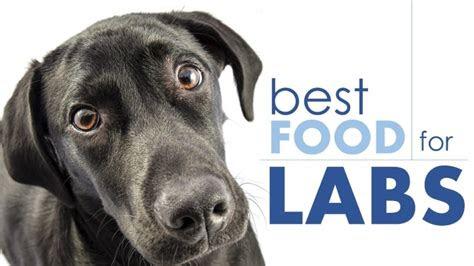 dog food  labs  puppy  senior diets