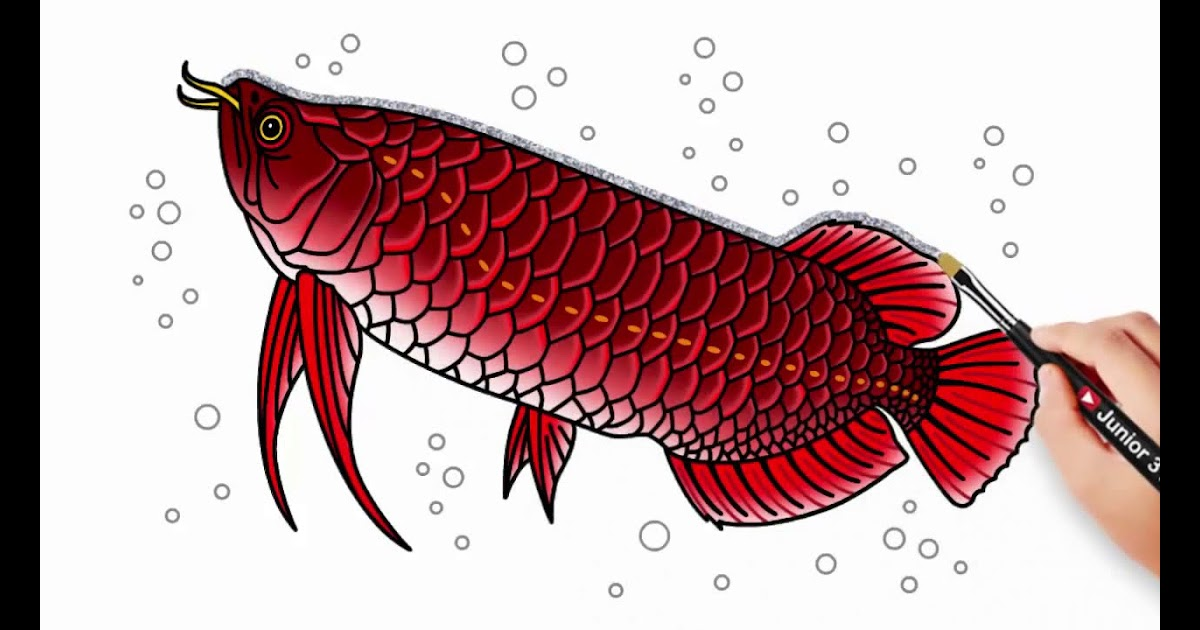 mewarnai gambar ikan arwana