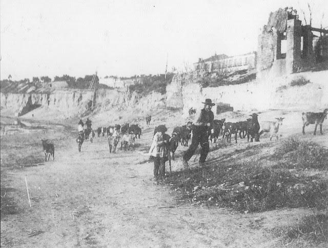 Ganado en Buenavista hacia 1900