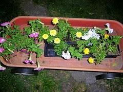 flowersstressed