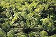 Foto Fern Forest