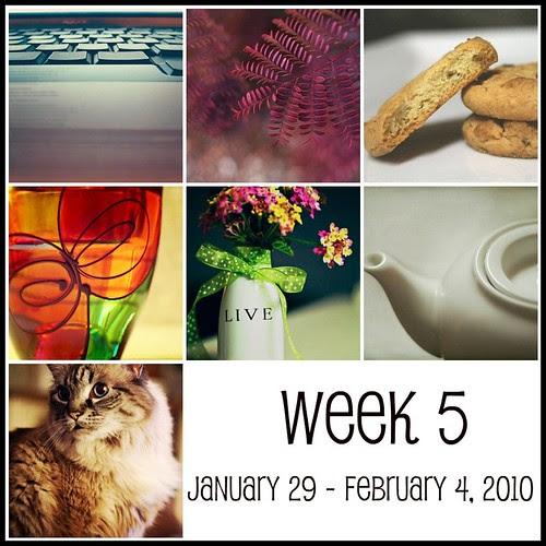 Week 5  (365:2010)