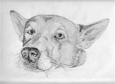 animal drawings  psd ai vector eps format