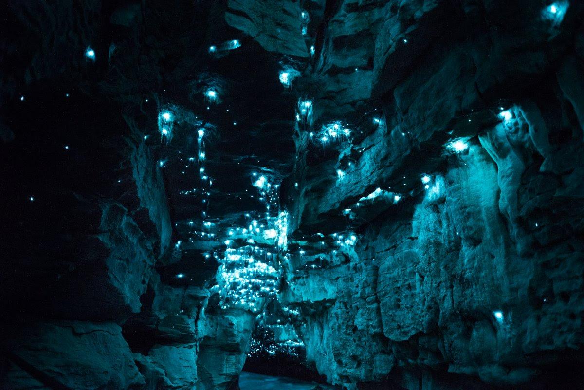 Por que a Nova Zelândia tem cavernas com tetos luminosos e brilhantes? 13