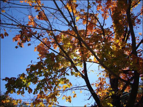 Strong autumn sunshine