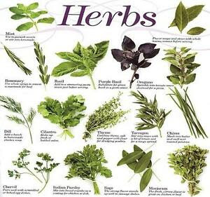 33 Herb Seeds Variet