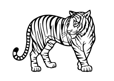 animal coloring sheets  kids coloring pages  kids