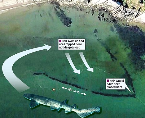 The giant fish trap, built during the Norman Conquest, was spotted on Google Earth, and was designed to trap fish behind rock walls