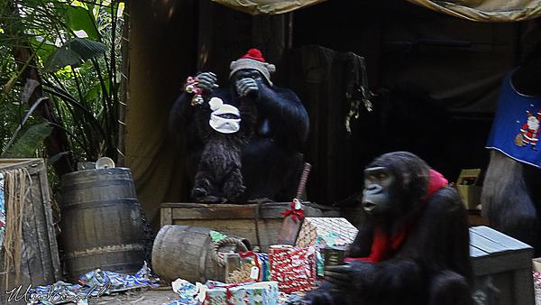 Disneyland Resort, Disneyland, Jungle Cruise, Jingle Cruise, Christmas Time, Christmas