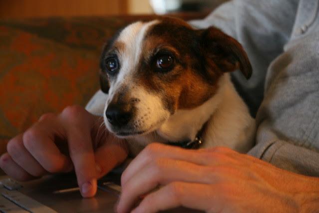 Molly July 2008
