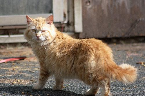 Fluffy Orange Julius