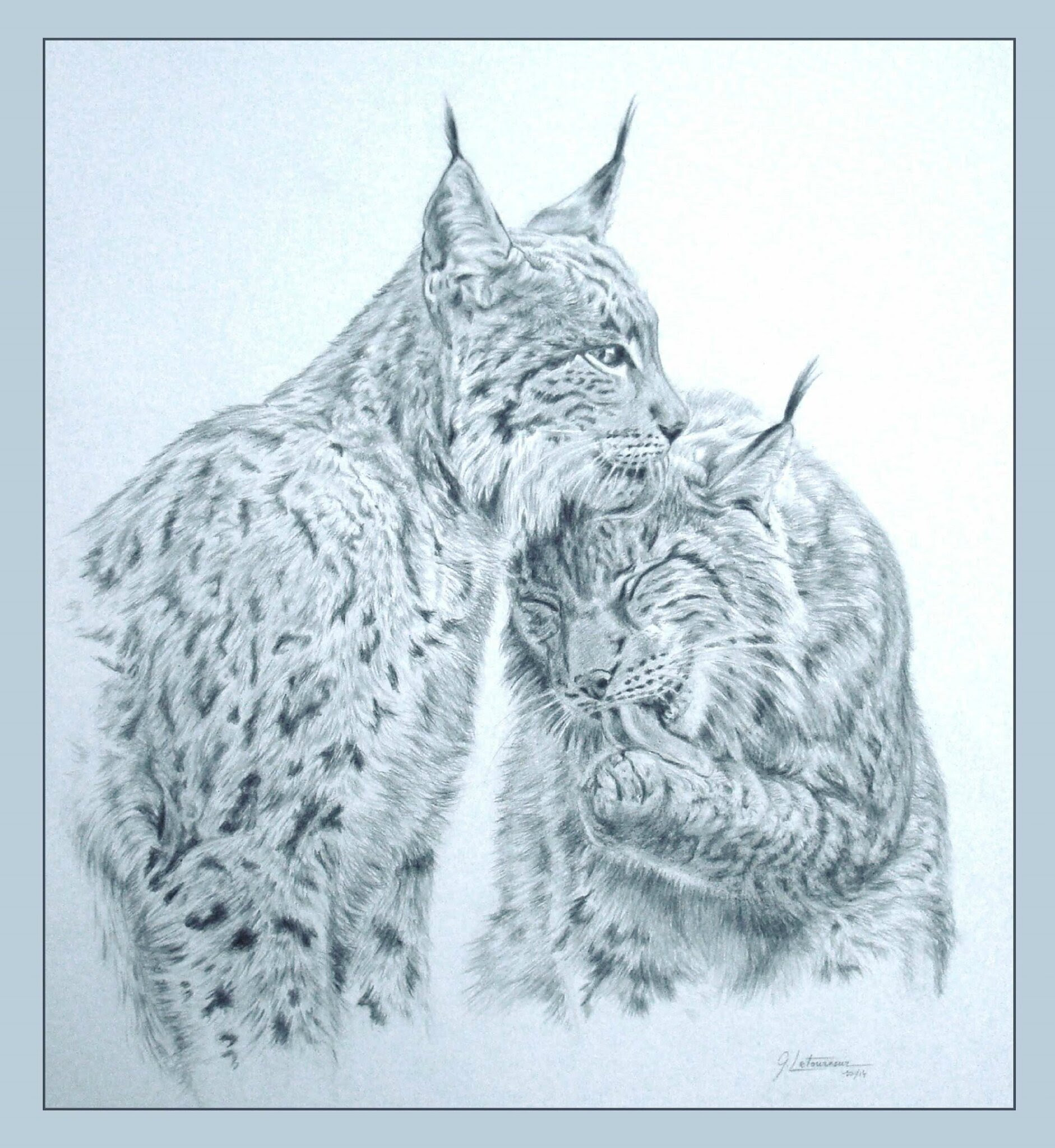 10 Coloriage De Lynx A Imprimer | Imprimer et Obtenir une ...
