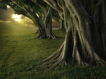 El árbol De La Autoestima Crecimiento Positivo
